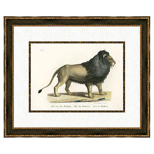 Brodtman Lion
