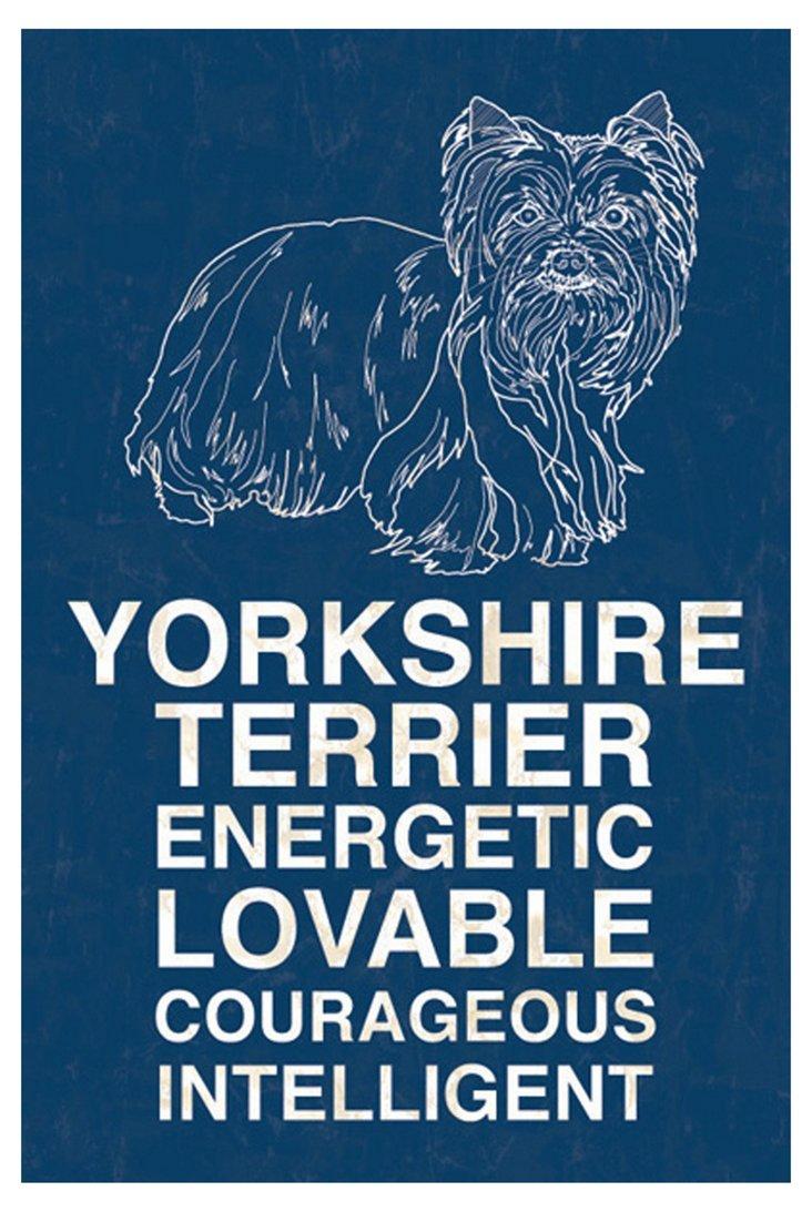 Yorkshire Terrier, Blue