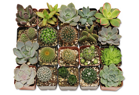 Asst. of 20 Succulents Arrangement Kit