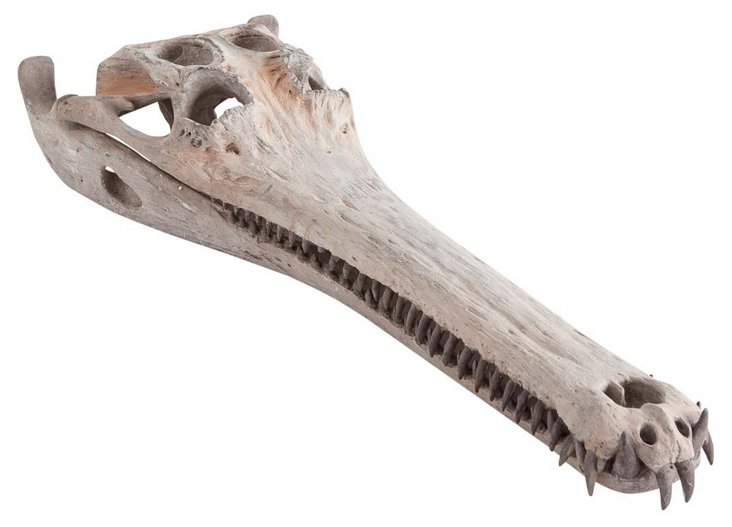 "31"" Alligator Skull Carving, Beige"