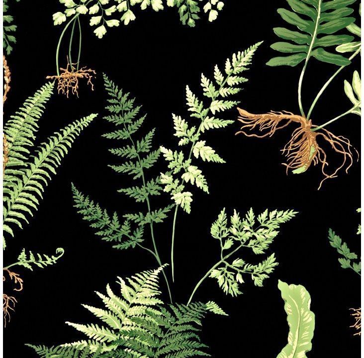 Ferns, Black