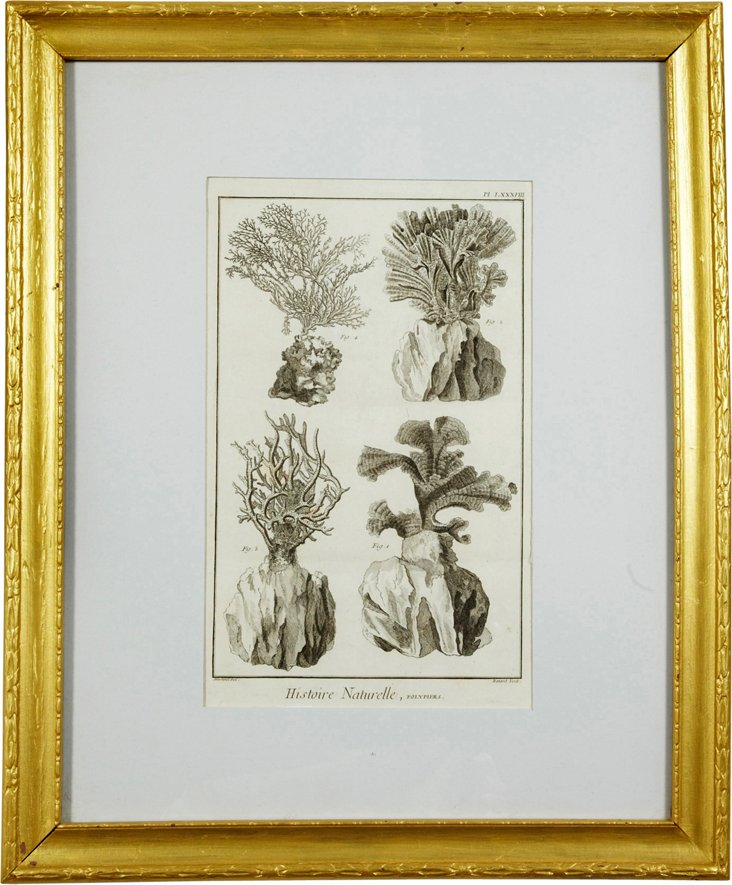 Framed Coral Lithograph