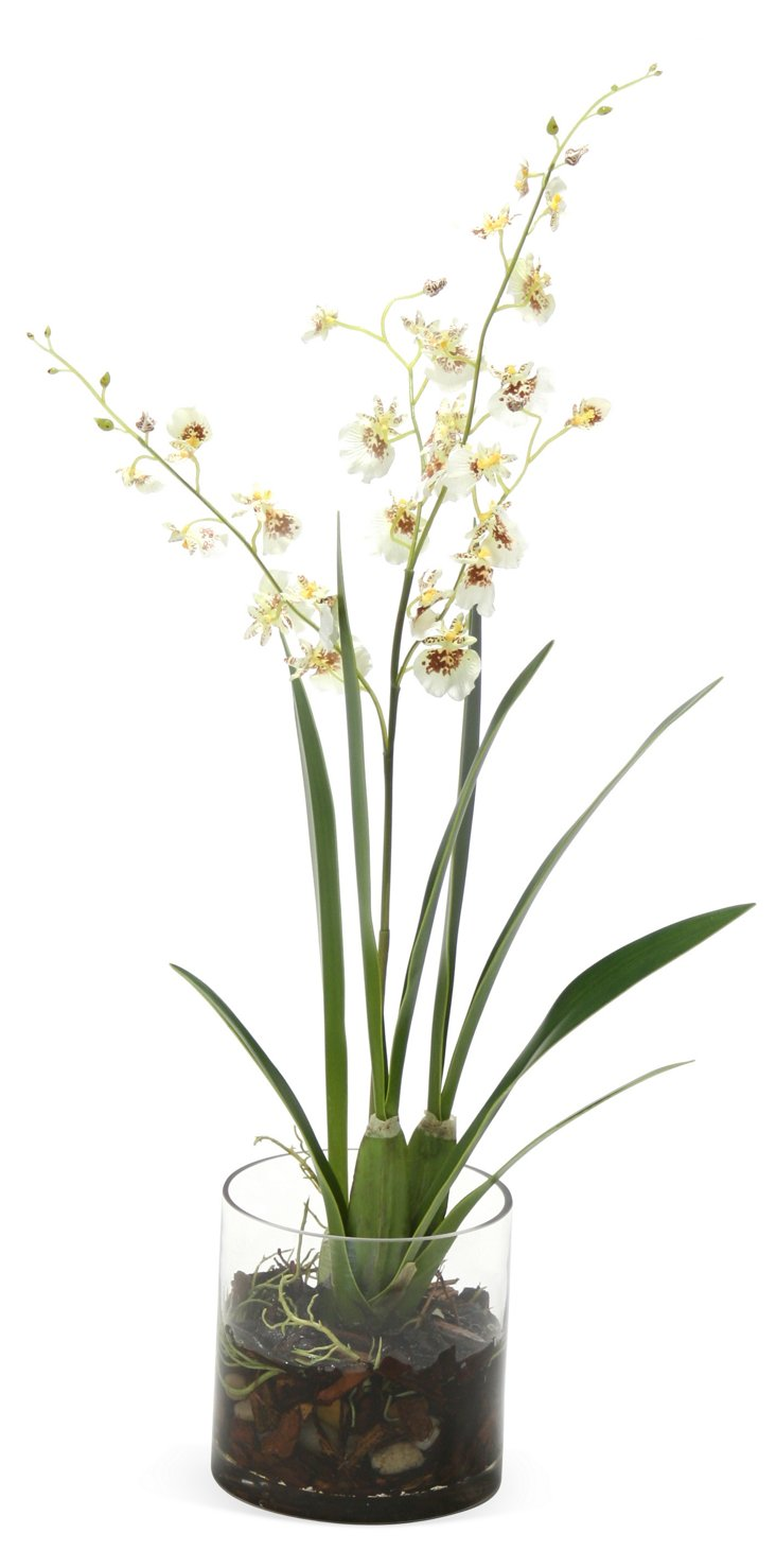 """25"""" Orchids in Vase, Faux"""