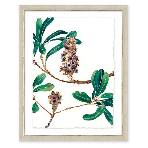 Gabby Malpas, Banksia I