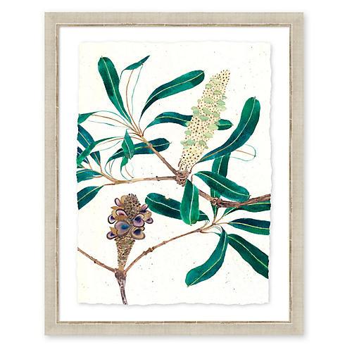 Gabby Malpas, Banksia II S20