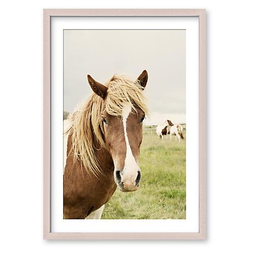 Icelandic Horse, Christine Flynn
