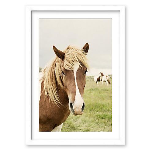 Christine Flynn, Icelandic Horse