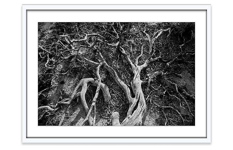 Amy Neunsinger, Joshua Tree 2