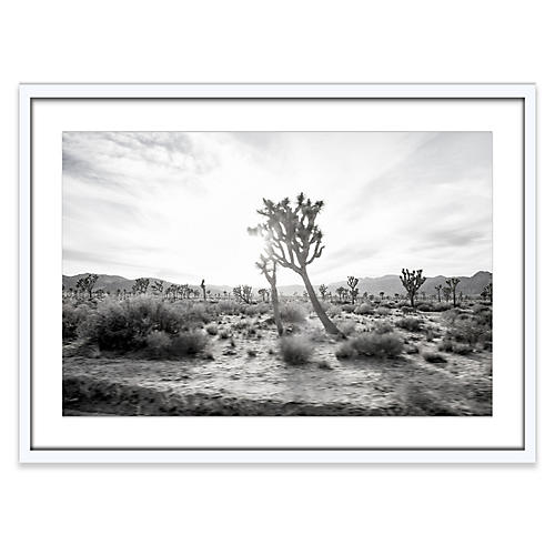 Amy Neunsinger, Joshua Tree 5