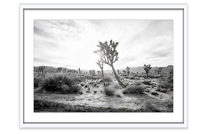 Amy Neunsinger, Joshua Tree 5