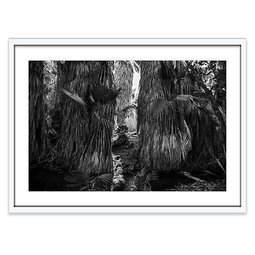 Joshua Tree 9, Amy Neunsinger