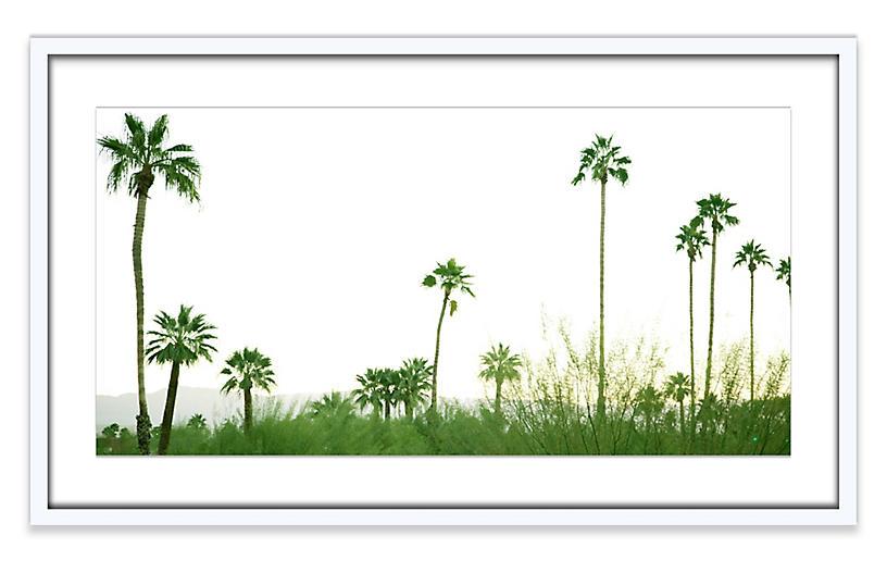 Amy Neunsinger, Palmscape