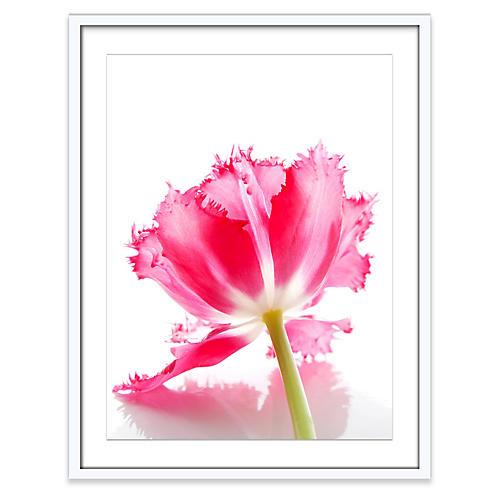 Amy Neunsinger, Ruffled Tulip