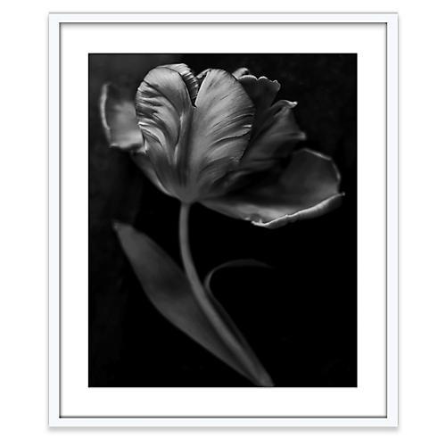 Tonal Tulip, Amy Neunsinger