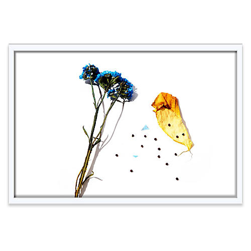 Frank Frances, Floral I