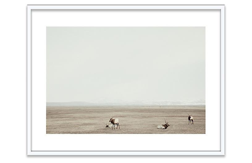 Christine Flynn, Elk, Jackson Hole