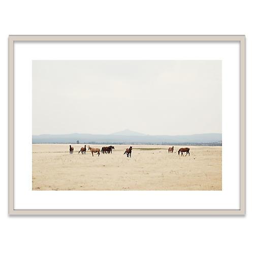 Wild Horses II Photograph