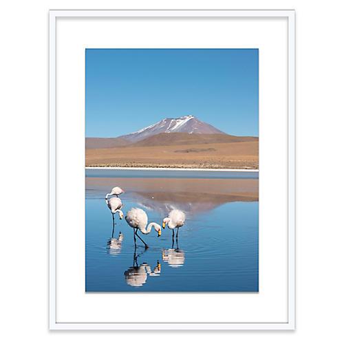 Salt Flat Flamingos, Richard Silver