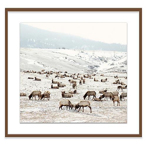 Christine Flynn, Elk Battle