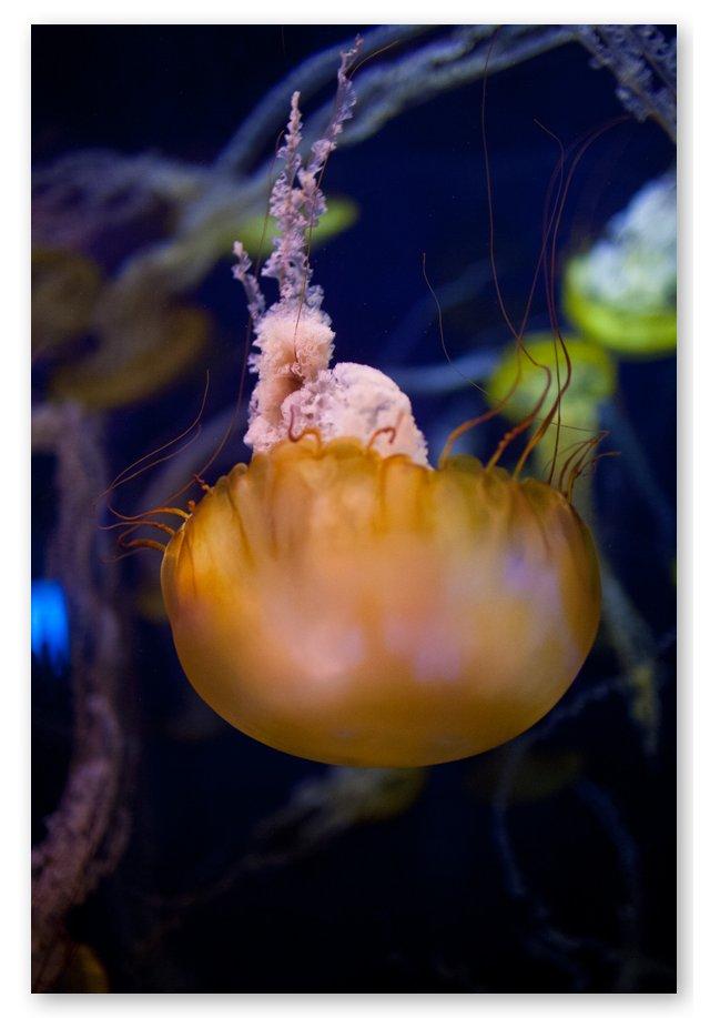 Steve Gorman, Jellyfish XXIX