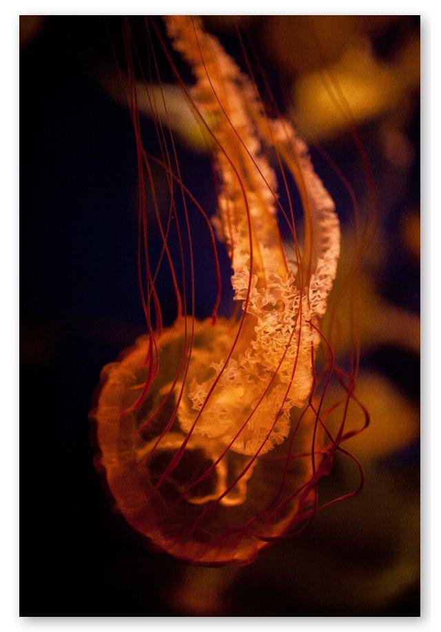 Steve Gorman, Jellyfish XXXVIII