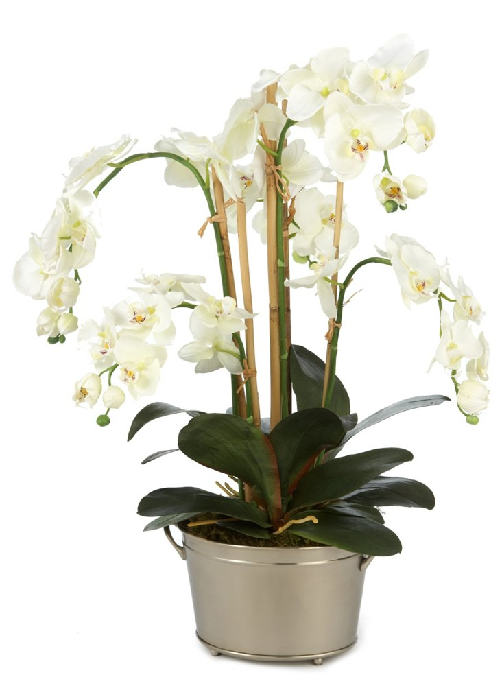 White Orchids In Silver Bucket
