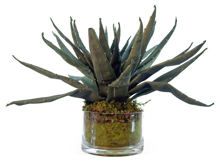 "12"" Agave & Moss in Glass Vase, Faux"