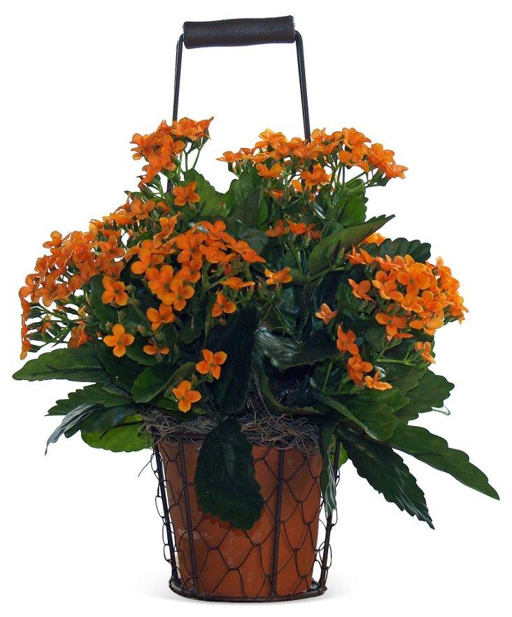 "13"" Kalanchoe in Basket, Orange"