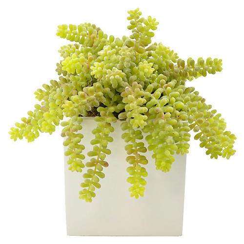 """12"""" Monkey Tail Cactus Plant, Faux"""