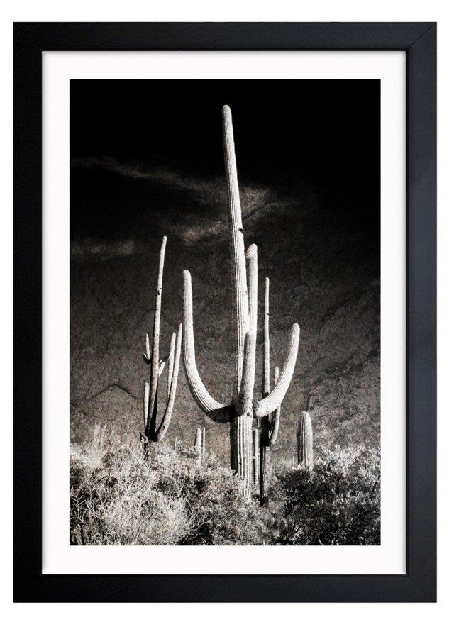 Oliver Gal, Saguaro
