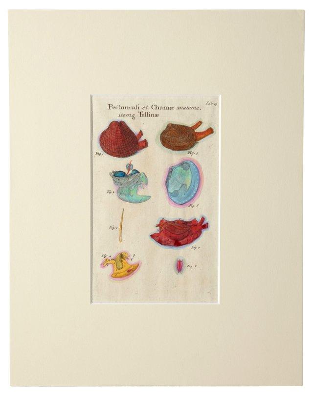 Vintage Audubon Print w/ Mat I