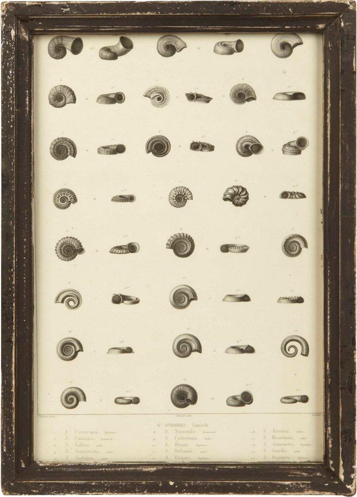 Framed Nature Print, Lamarek
