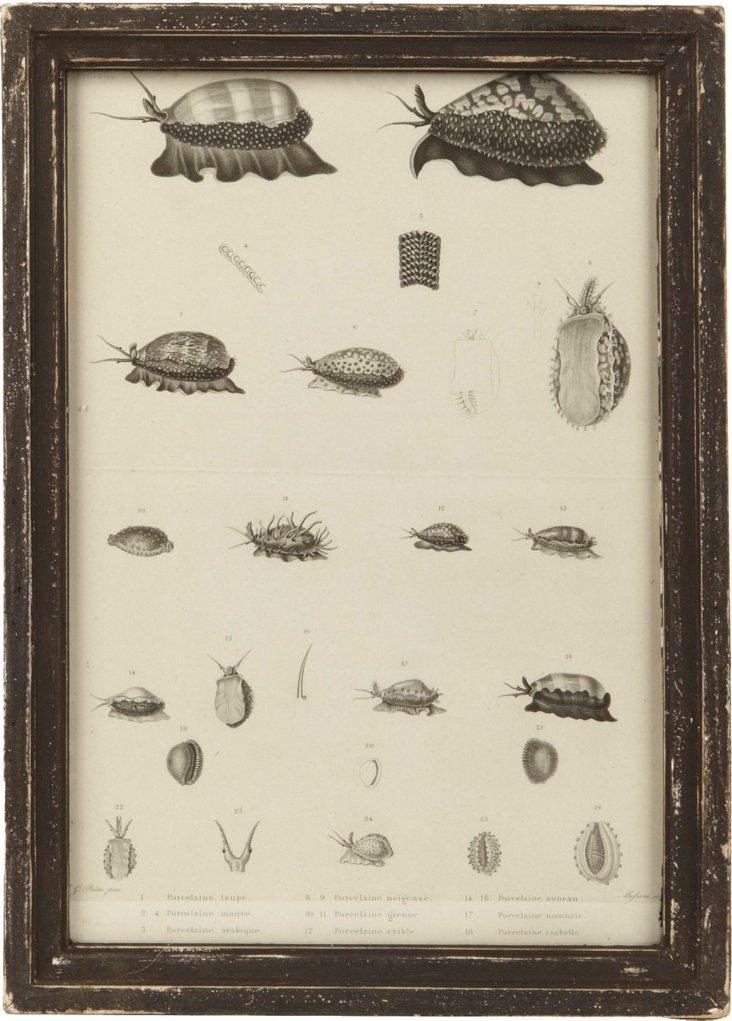 Framed Nature Print, Porcelain