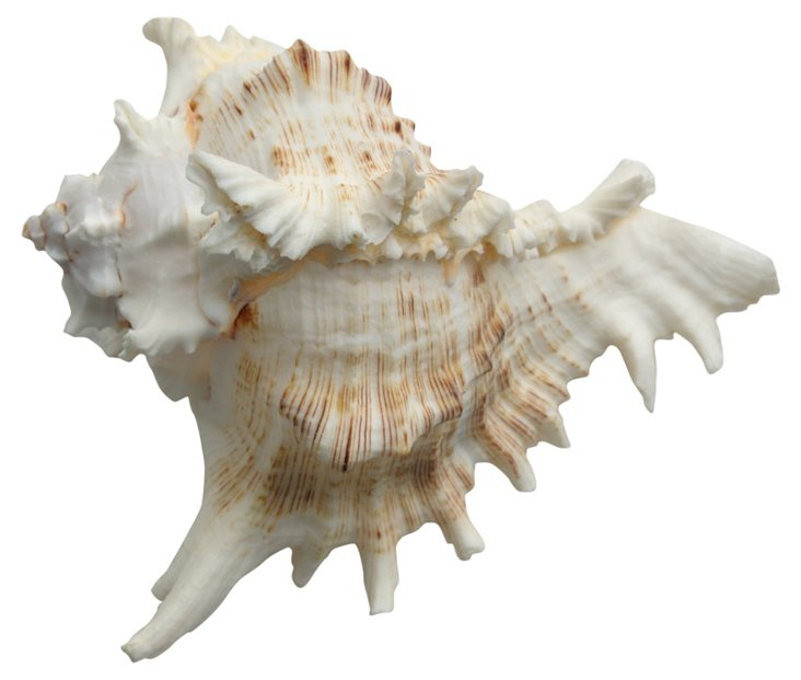 Seashell Objet