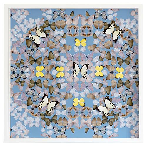 Butterfly Construction: Robin Blue, Dawn Wolfe