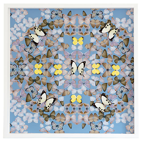 Dawn Wolfe, Butterfly Construction: Robin Blue