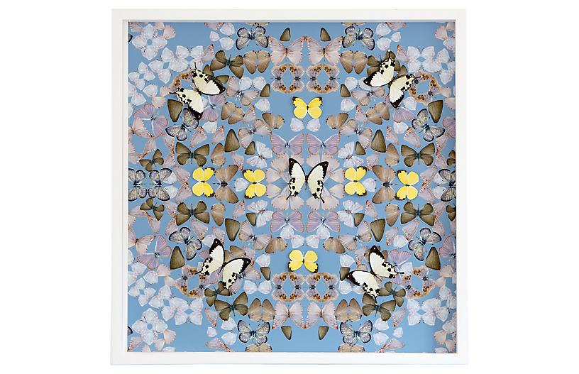 Dawn Wolfe, Butterfly Construction: Robin Blue