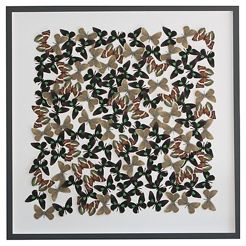 Butterfly Cutouts: Forest Colors, Dawn Wolfe