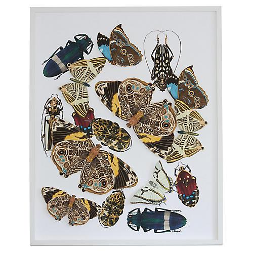 Dimensional Brown Moths, Dawn Wolfe