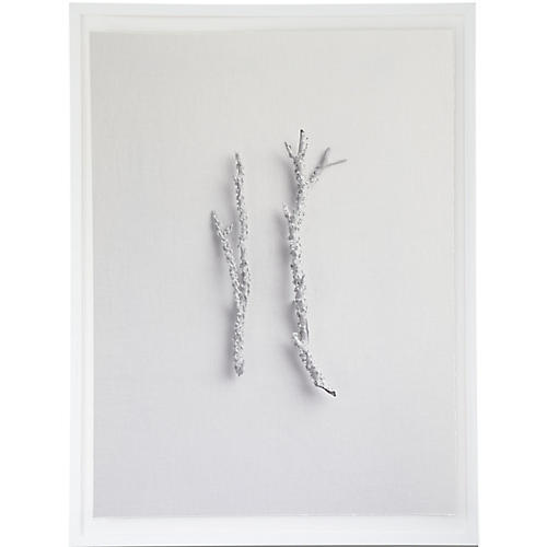 Dawn Wolfe, Coral Branch