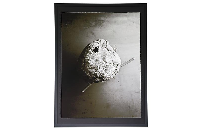 Dawn Wolfe, Nest