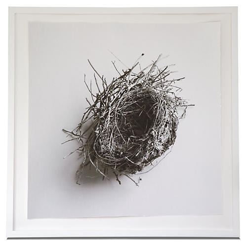 Dawn Wolfe, Robin Nest