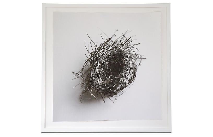 Dawn Wolfe, Robin Nest