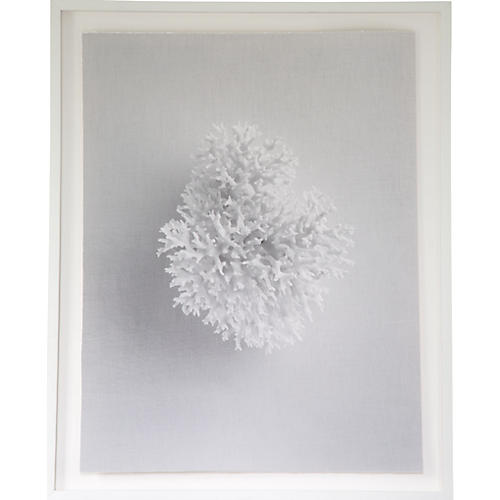 Dawn Wolfe, White Coral