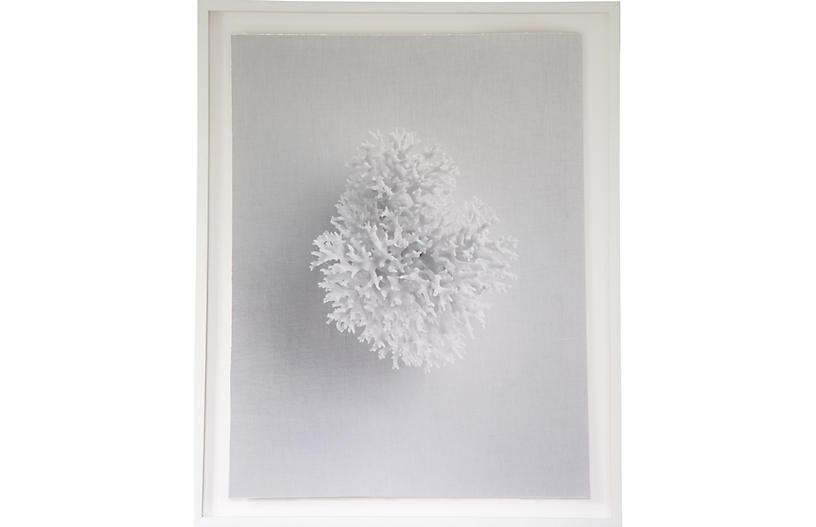Dawn Wolfe, White Coral