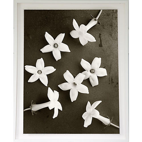 Dawn Wolfe, Scattered Flowers
