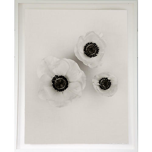 Dawn Wolfe, Anemones on Linen