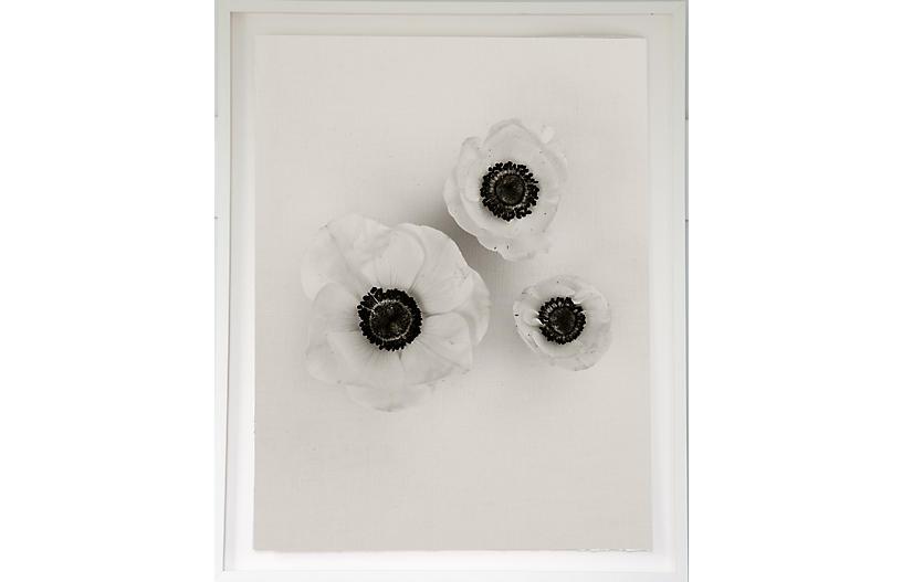 Dawn Wolfe, Anemones on Linen