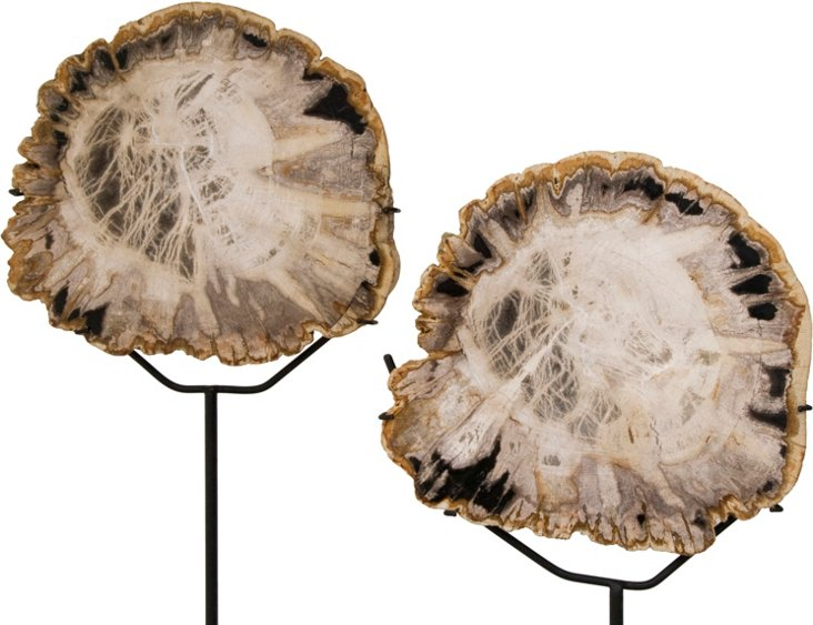 Petrified Wood on Stand, Pair