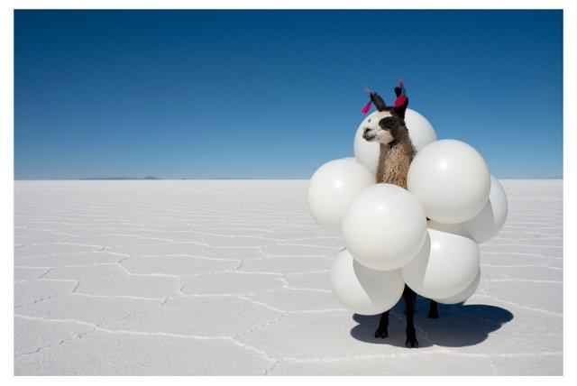 Gray Malin, Llama White Balloons